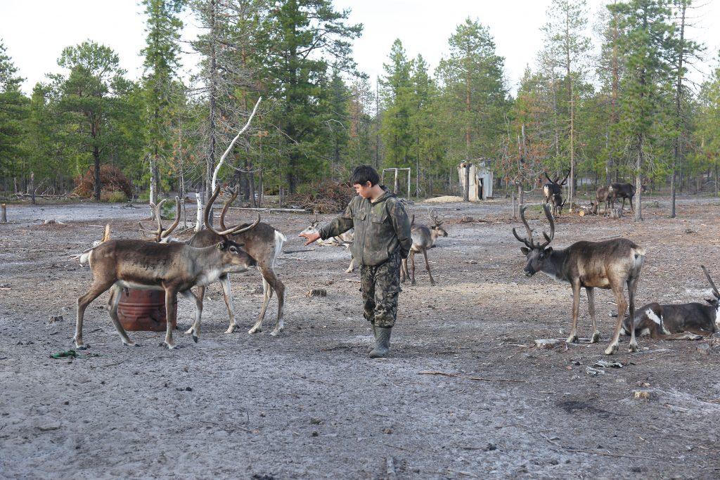 Sibirische Taiga: Menschen und Tiere leben eng zusammen und können Hinweise auf den Umgang mit Pandemien geben.