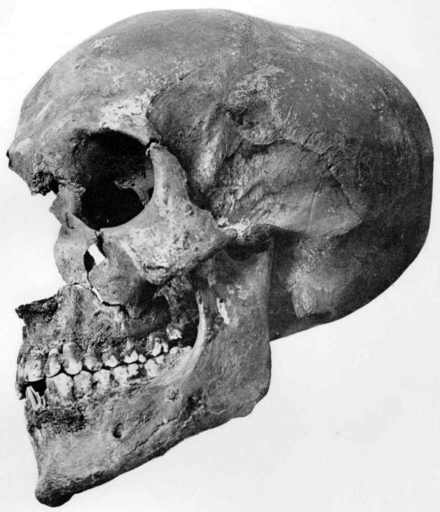 Der Schädel von KV 55, Foto von G. E. Smith 1912 (Copyright abgelaufen).