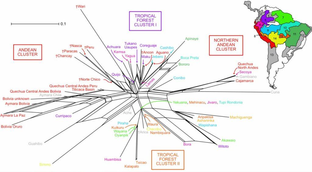 Ein Netzwerk, das die Beziehung zwischen Panflötenmerkmalen in verschiedenen Gesellschaften zeigt, und die regionalen und kulturellen Einflussbereiche widerspiegeln, die den nördlichen Anden, den südlichen Anden und einem amazonischen Kern entsprechen.
