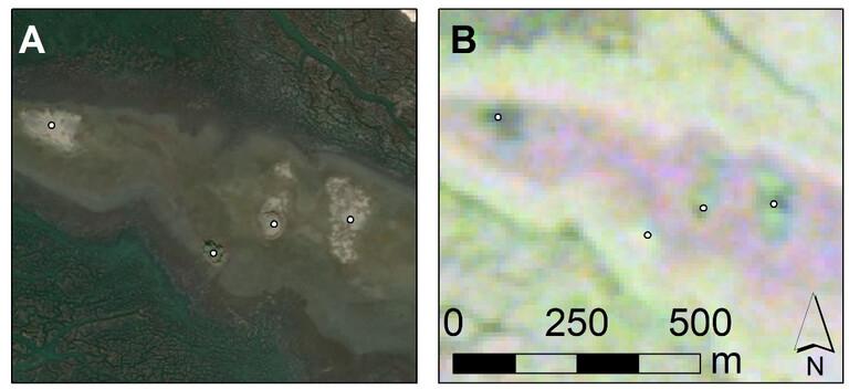 Die Muschelringe sind durch weiße Punkte gekennzeichnet. Feld A zeigt, wie Muschelringe auf einem normalen Satellitenbild aussehen. Feld B zeigt, wie Muschelringe in Radardaten (SAR) aussehen. Sie heben sich deutlich von der Umgebung ab, was zum Teil auf ihre Zusammensetzung und die Beschaffenheit des Bodens auf und um diese Merkmale zurückzuführen ist